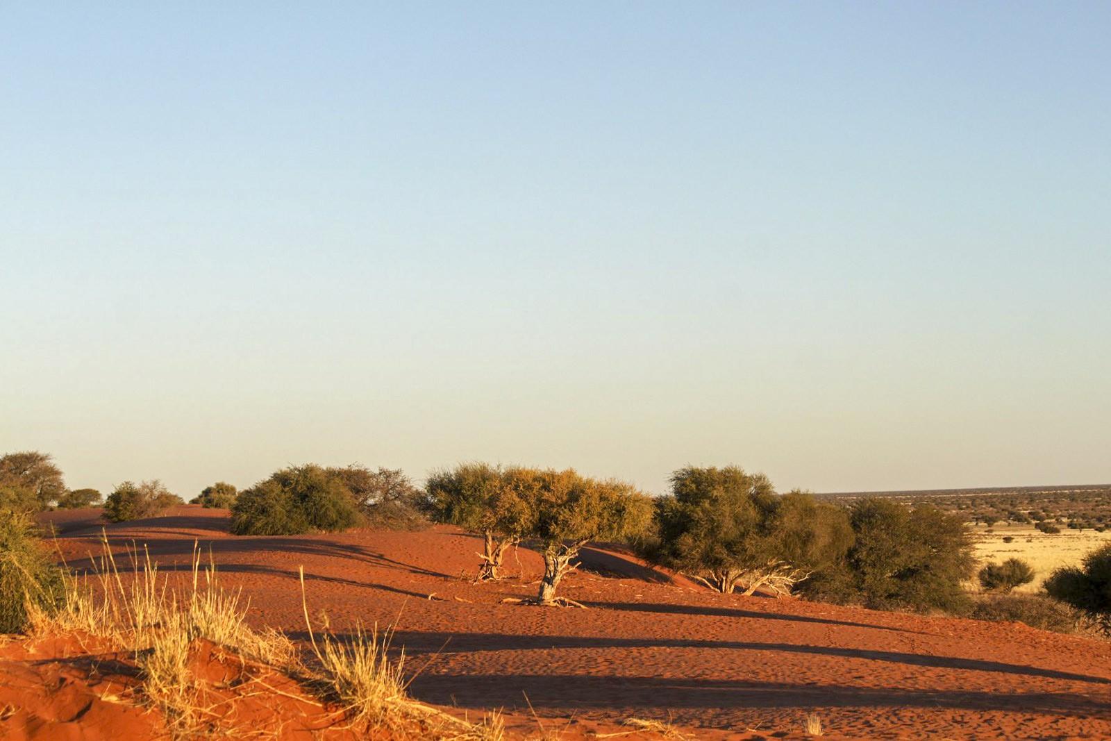 Trees in desert area